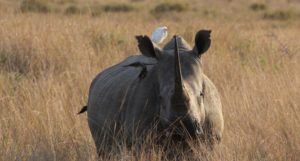 In a Rhino, Everything